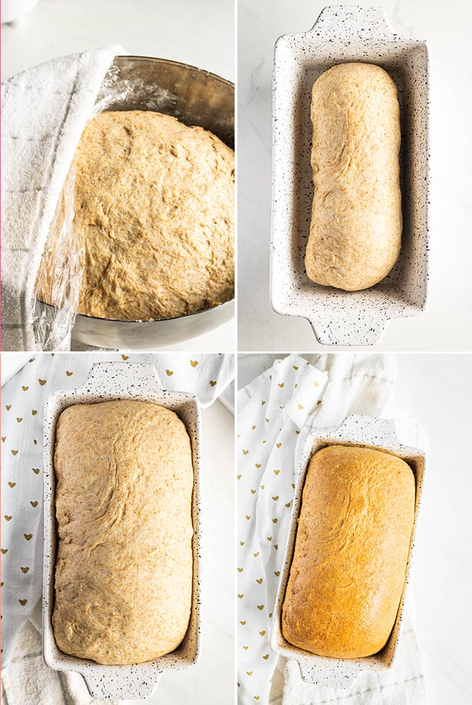 Whole Wheat Bread Process Shots